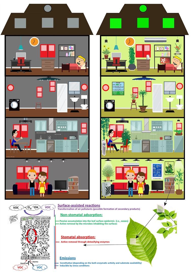 سمزدایی, پاکسازی هوا, گیاهان, تصفیه هوا, بوگیر طبیعی, بوگیر گیاهی, کاهش سموم, بوی نامطبوع, هوای پاک,